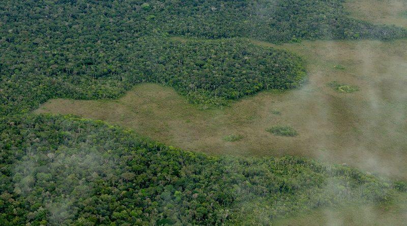 Desmatamento na Amazônia dispara e aumenta mais de 400% em novembro