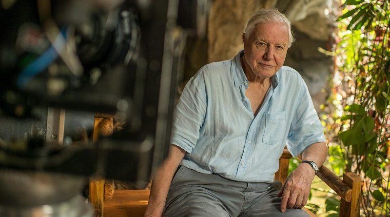 """""""O Jardim do Éden não existe mais"""", diz naturalista David Attenborough, sobre impacto do homem no planeta"""