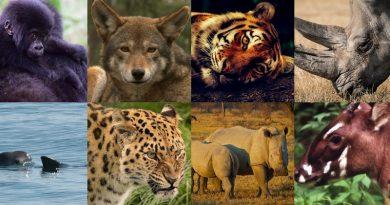 Oito espécies que podem entrar em extinção já em 2019