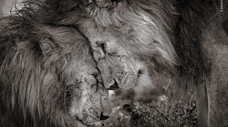 A vez do voto popular: melhores imagens para o público do Wildlife Photographer of the Year
