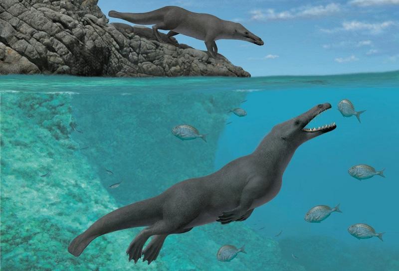 Revelado como chegou à América do Sul ancestral da baleia, que tinha quatro patas e andava na terra