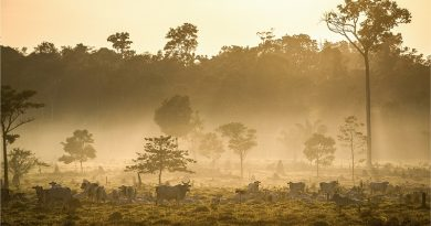 Mais de 600 cientistas pedem que Europa condicione acordos comerciais com Brasil à preservação ambiental