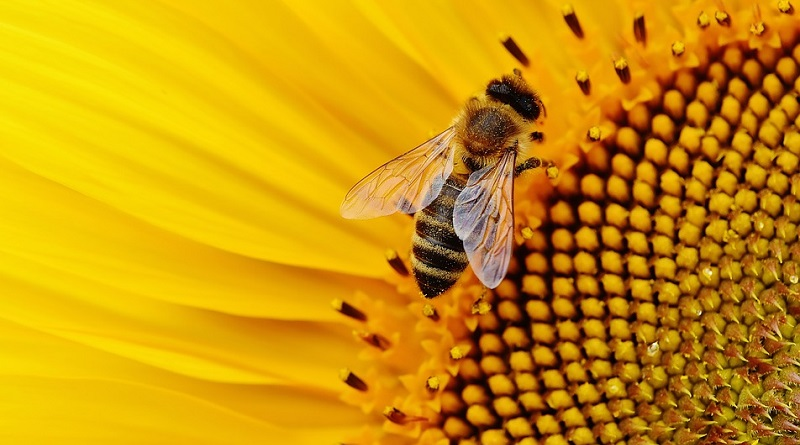 Morgan Freeman transforma sua fazenda em um santuário para as abelhas