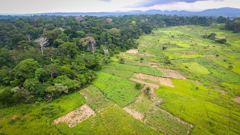 Planeta perdeu 12 milhões de hectares de florestas tropicais em 2018. Brasil está no topo do desmatamento