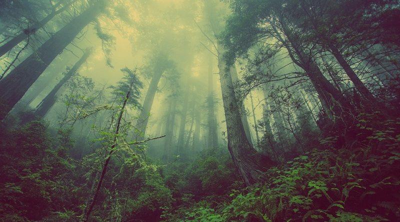 Restaurar florestas e ecossistemas pode ser a solução para combater as mudanças climáticas