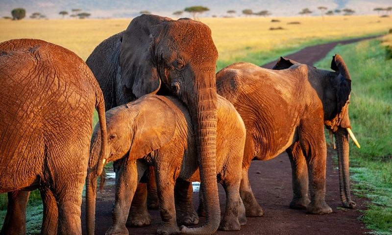Botsuana libera novamente a caça a elefantes