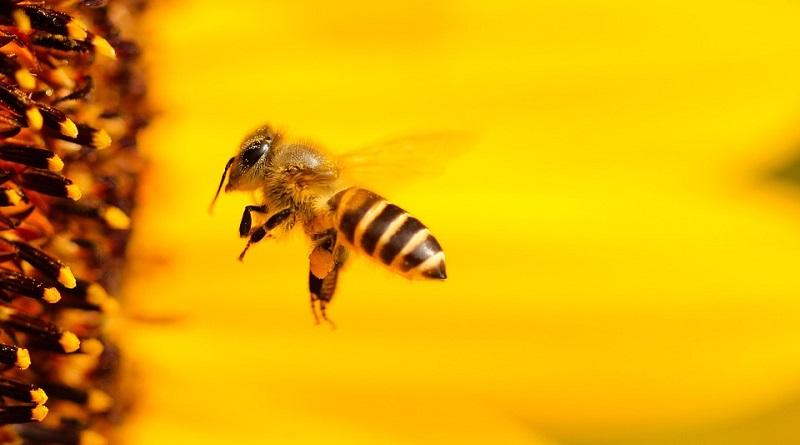 Discussão no Senado sobre a proibição de novos agrotóxicos e a proteção de abelhas no Brasil está nas suas mãos! Participe!