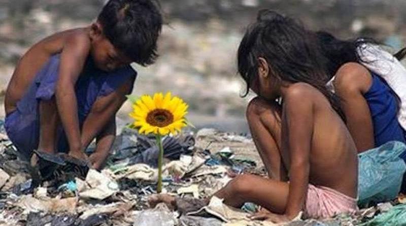 Ilha Das Flores O Que Aprendemos Sobre Lixo E Humanidade