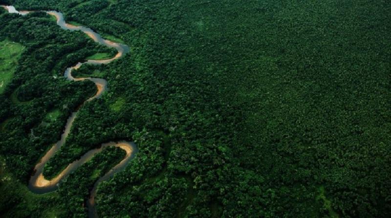 Presidente do Ibama libera desmatamento em área de Mata Atlântica contrariando parecer técnico do próprio instituto