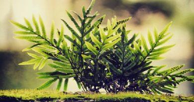 planta tentando crescre na Beabel de concreto