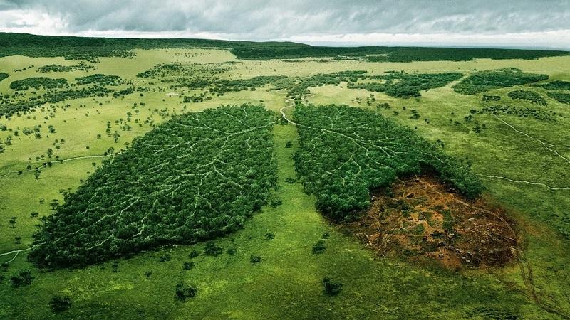 desmatamento na Amazônia cresce 20% entre agosto de 2018 e abril de 2019