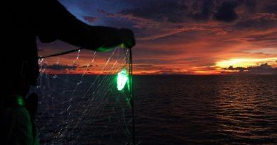 Redes iluminadas podem impedir morte de tartarugas presas acidentalmente por pescadores