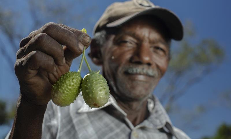Agricultura familiar, a solução para os nossos pepinos