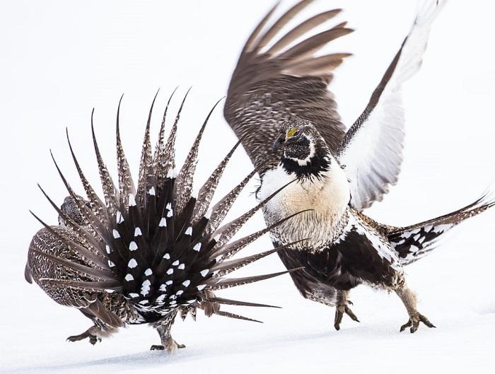 Flagrantes fotográficos surpreendentes revelam a beleza do mundo das aves