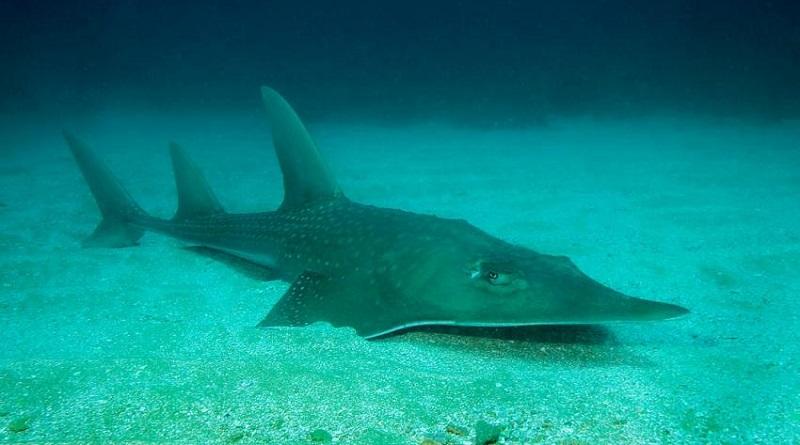 Mais de 28 mil espécies estão em risco de extinção, revela nova lista vermelha da IUCN