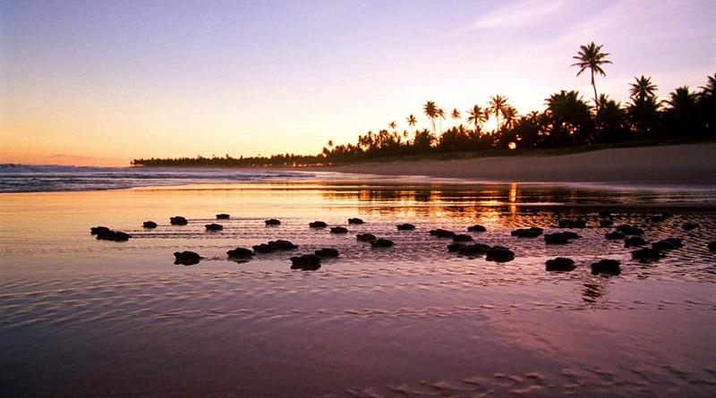 Mais de 2 milhões de tartarugas devem nascer na costa brasileira este ano