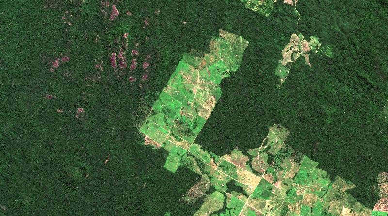 Amazônia perde 1.287 km2 de florestas em julho, indica monitoramento do Imazon