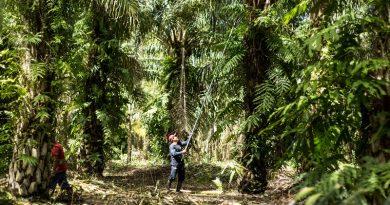 Produtores de óleo de palma do Peru assinam compromisso pelo desmatamento zero