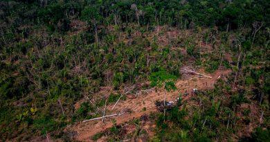 Desmatamento na Amazônia tem aumento de 60% em agosto, apontam dados do Imazon