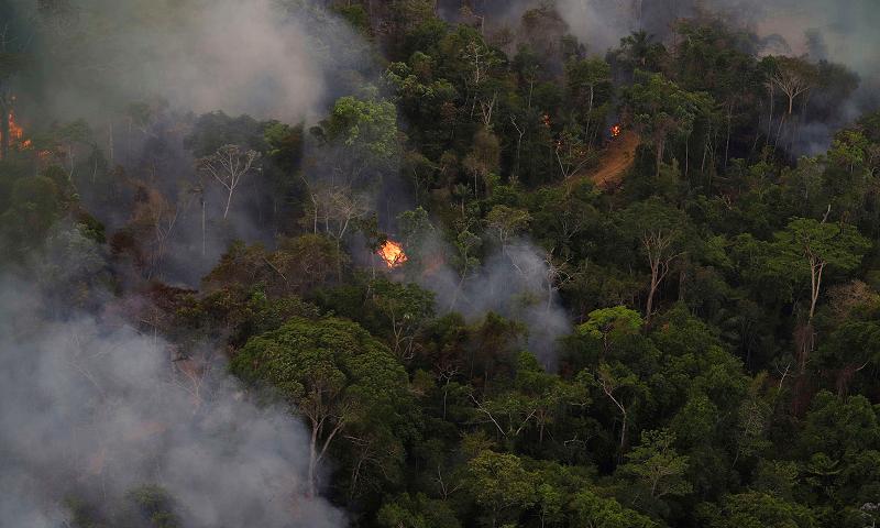 Alertas de desmatamento da Amazônia têm alta 321% em agosto