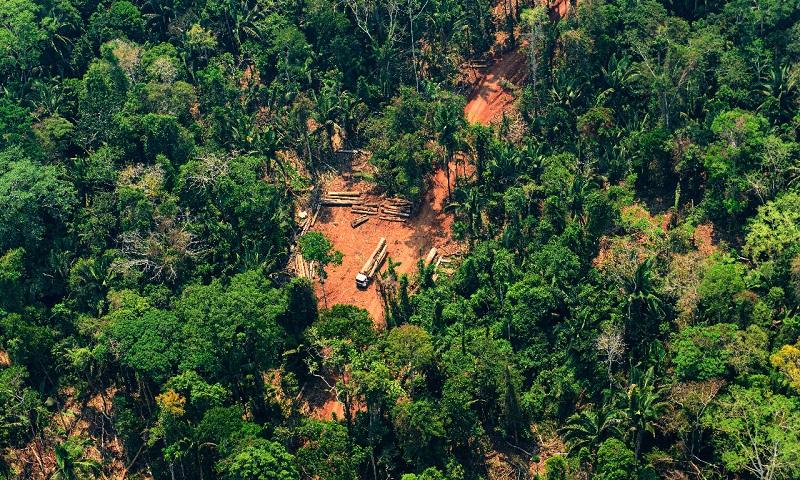 Rede de criminosos usa violência e intimidação para realizar desmate ilegal na Amazônia
