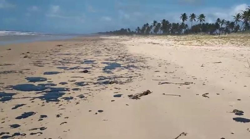Golfinho é encontrado morto com manchas de óleo em praia de Alagoas