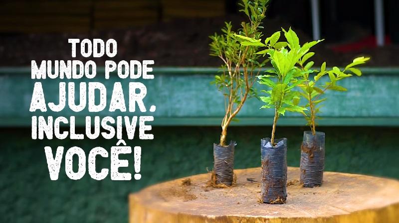 Curitiba convida população a um desafio: o plantio de 100 mil árvores
