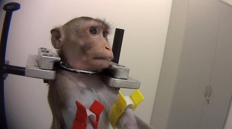 Imagens chocantes mostram tortura e crueldade em testes com animais em laboratório alemão