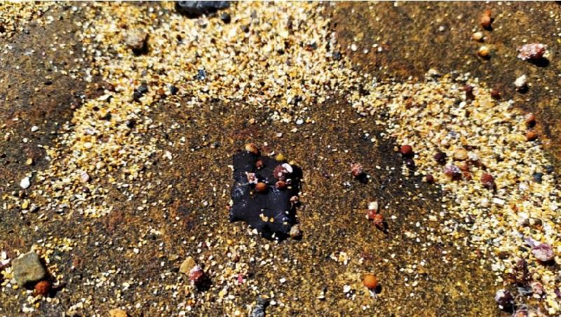 Mais de 300 praias já foram afetadas pelo óleo: visitação em Abrolhos é suspensa
