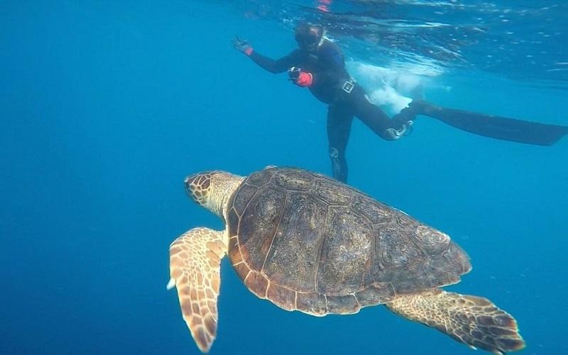 Tartarugas marinhas resgatadas sujas com óleo voltam, finalmente, ao mar