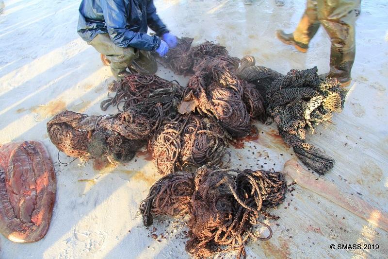 Baleia achada morta na Escócia tinha 100 kg de plástico e redes de pesca no estômago