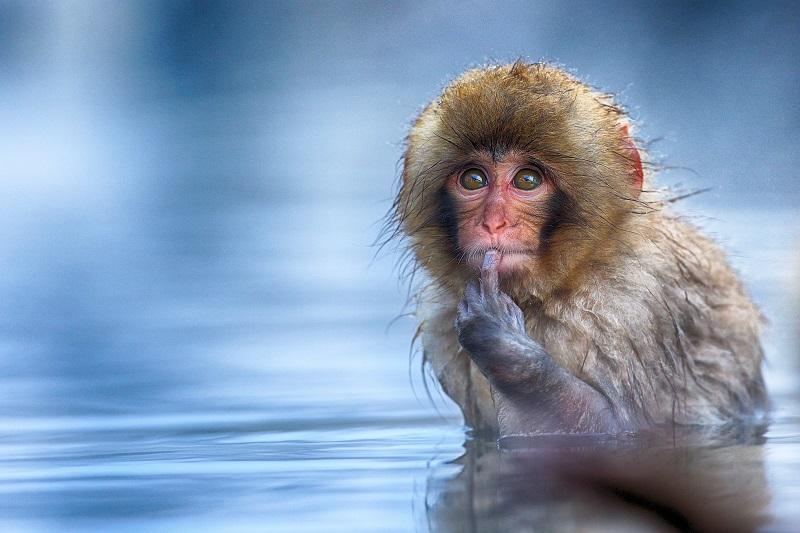 Comedy Wildlife Photography Awards: concurso fotográfico alia bom humor à proteção animal