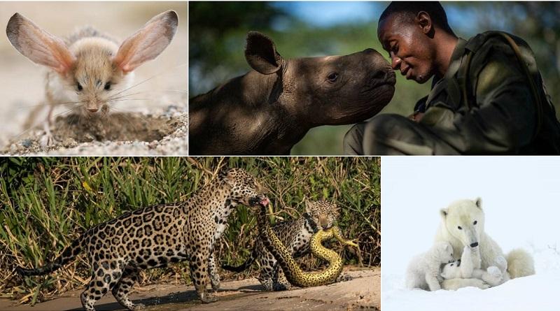 Wildlife Photographer of the Year: é a vez do público escolher sua imagem favorita!