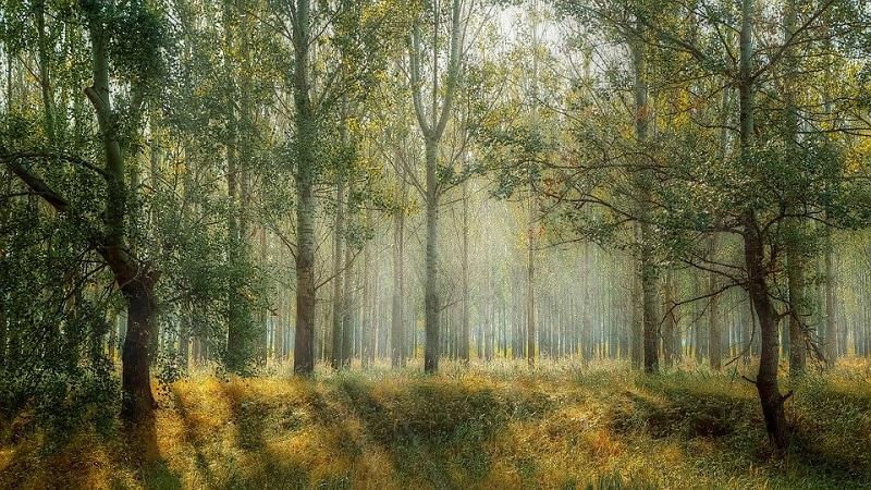 Um trilhão de árvores: a iniciativa global pela preservação da biodiversidade e combate às mudanças climáticas