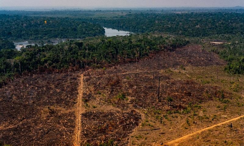 Degradação da Floresta Amazônica tem aumento de quase 800% em janeiro, indica alerta de desmatamento do Imazon