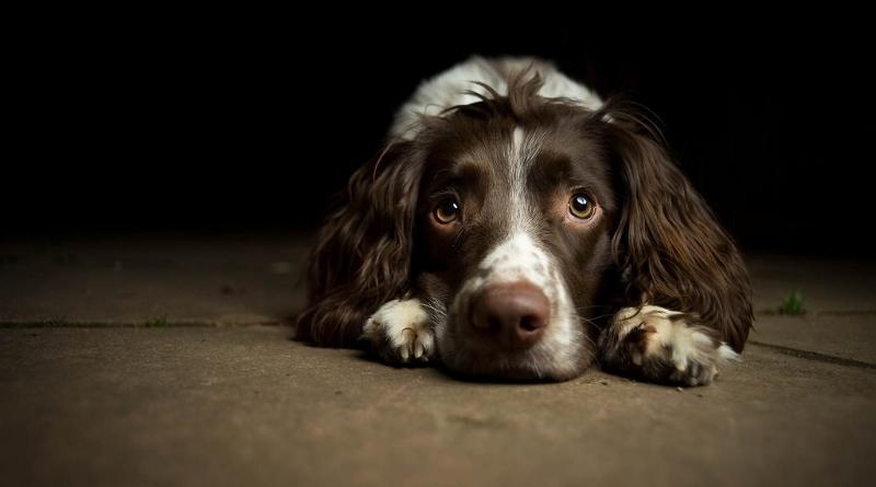 Cães e gatos não transmitem coronavírus, mas devem ser protegidos durante a quarentena
