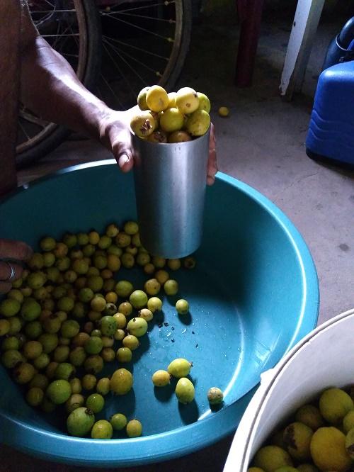 Cientista pernambucana ganha prêmio global com estudo sobre plantas alimentícias não convencionais, como araçá, cambuí e ingá