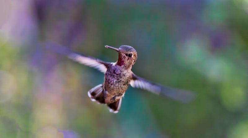 Beija-flores têm voo alterado pelas mudanças climáticas