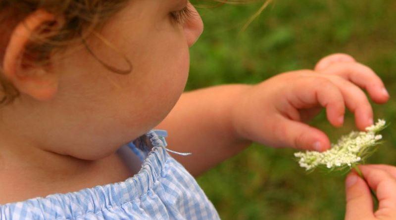 menina tira pétala de flor branca