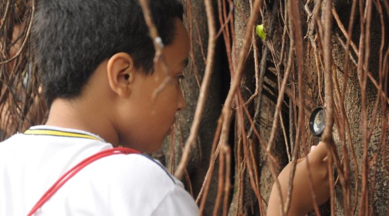 festival-cultivar-menino