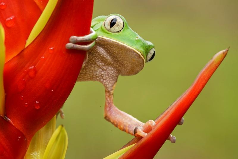 floresta-viva-candisani-filomedusa