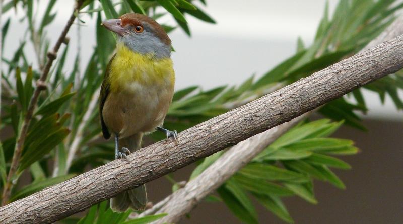 aves-na-janela-800x445