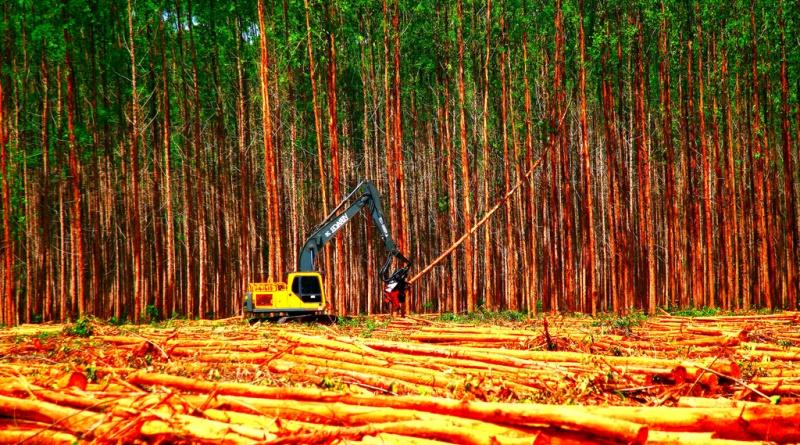 Brasil anuncia redução de emissões de gases de efeito estufa