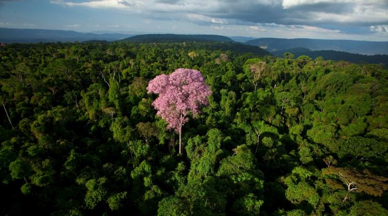 floresta_nacional_de_carajas_PA2_800