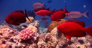 Grande Barreira de Corais na Austrália