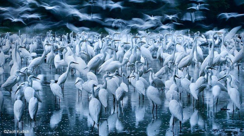revoada de pássaros brancos