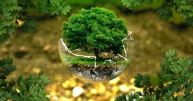 árvore dentro do globo representando mudanças climáticas