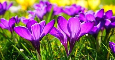 desabrochar de flores na primavera
