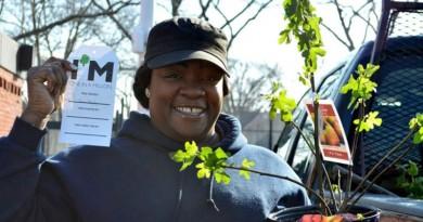 milliontreenyc: projeto que conseguiu plantar um milhão de árvores em Nova York