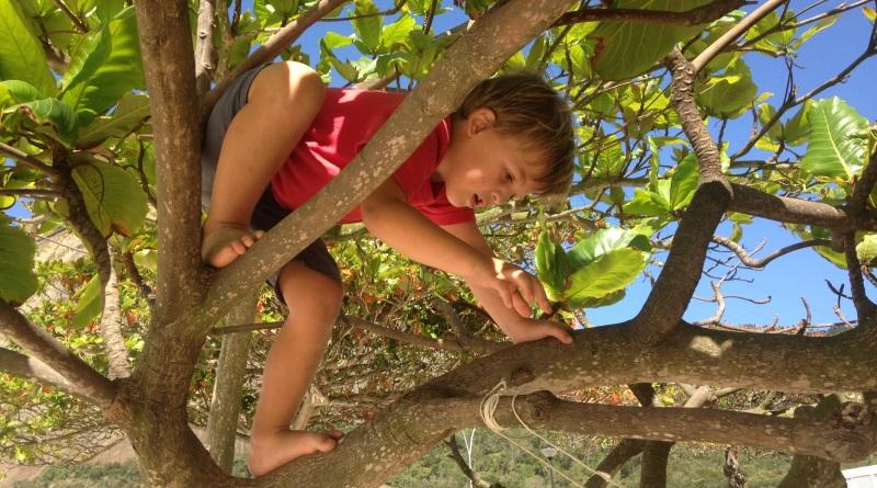 criança subindo na árvore